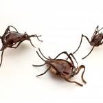 escarabajos chapa barida ,cobre , m- 10x 7 cm precio €85 peso 60 gr.
